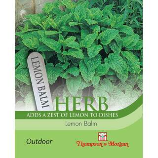 Herb Lemon Balm