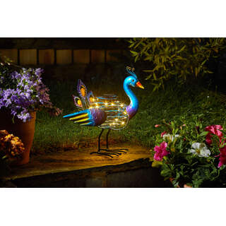 Peacock SpiraLight