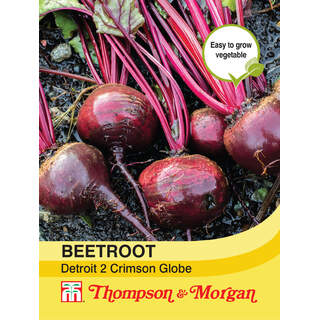 Beetroot Detroit 2 Crimson Gl
