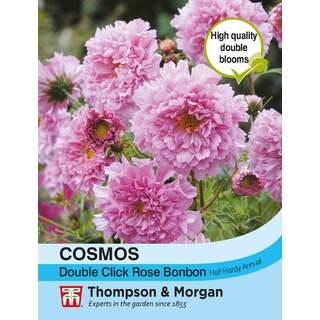 Cosmos Double Click Rose Bonb
