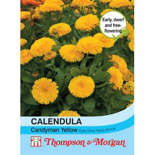 Calendula Candyman Yellow