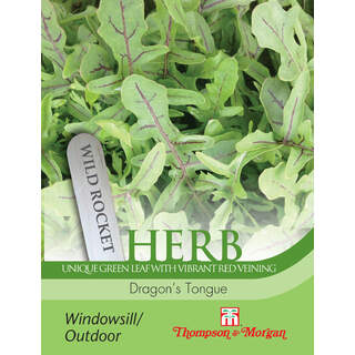 Herb Rocket Dragon s Tongue