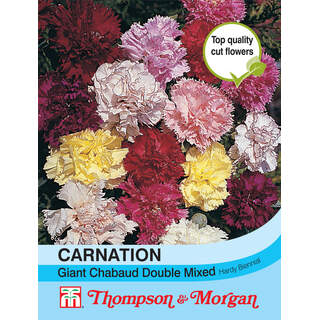 Carnation Giant Chabaud Doubl
